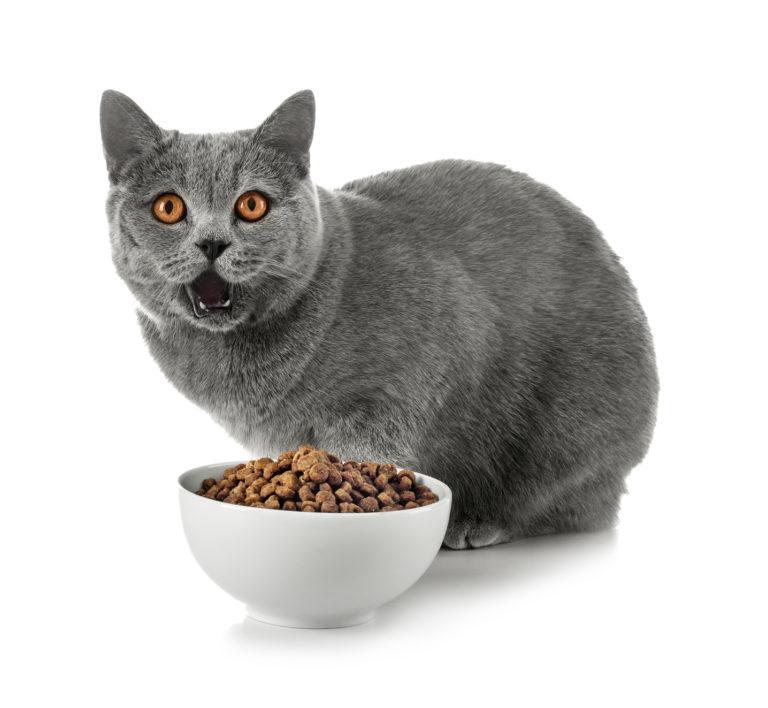 Fotografije masnih mokrih maca