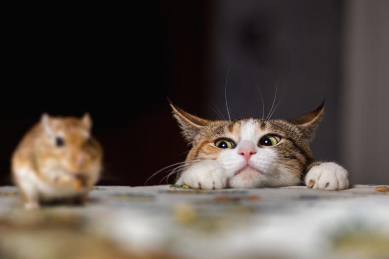 usne mlade mačke preuzmi video pun xxx