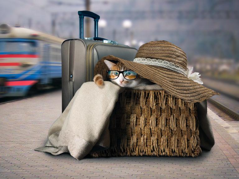 uska maca besplatno preuzimanje